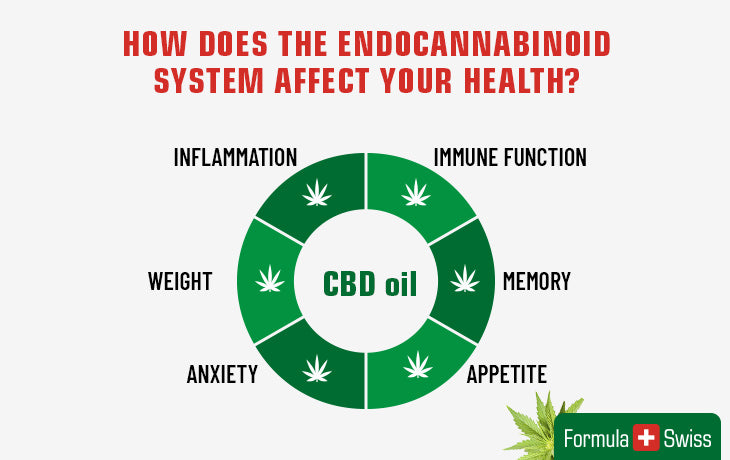 How does the endocannabinoid system affect your health?