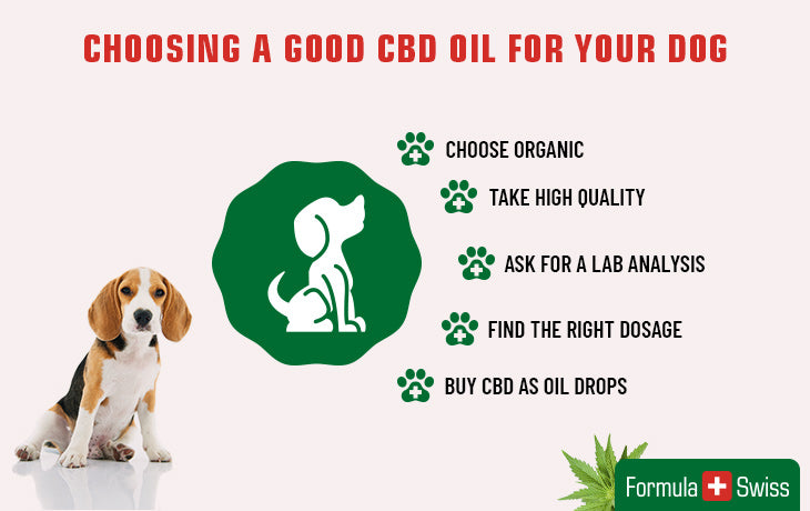 choosing cbd for dog