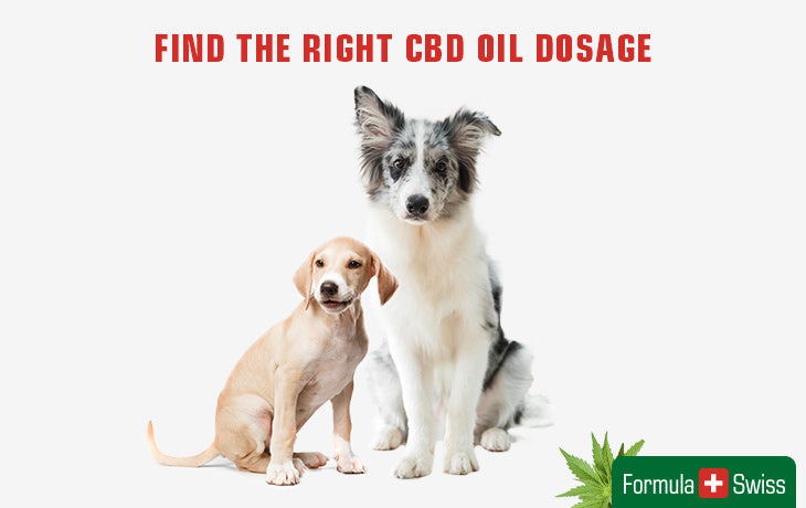 cbd oil dosage for your dog