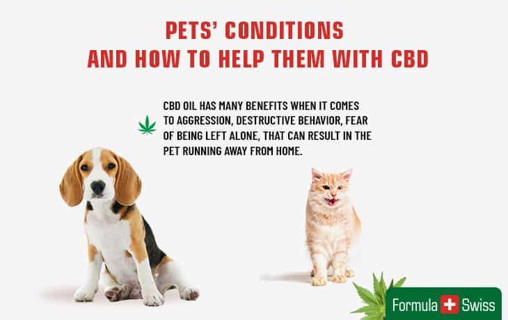Pets` conditions and how to help them with CBD
