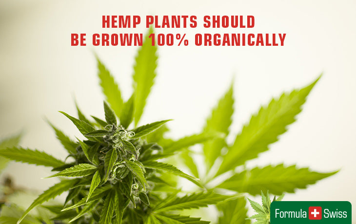 100% organic grown hemp