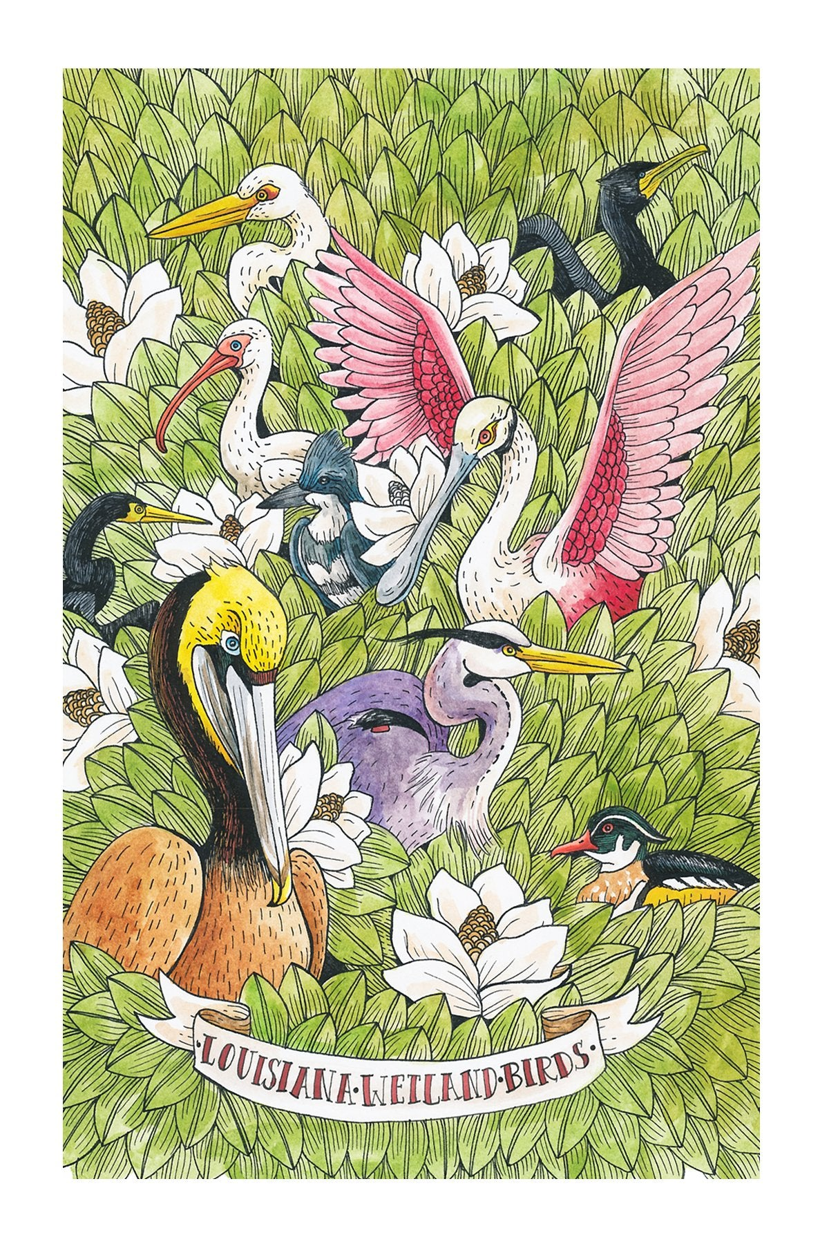 Louisiana Wetland Birds Postcard 6x4