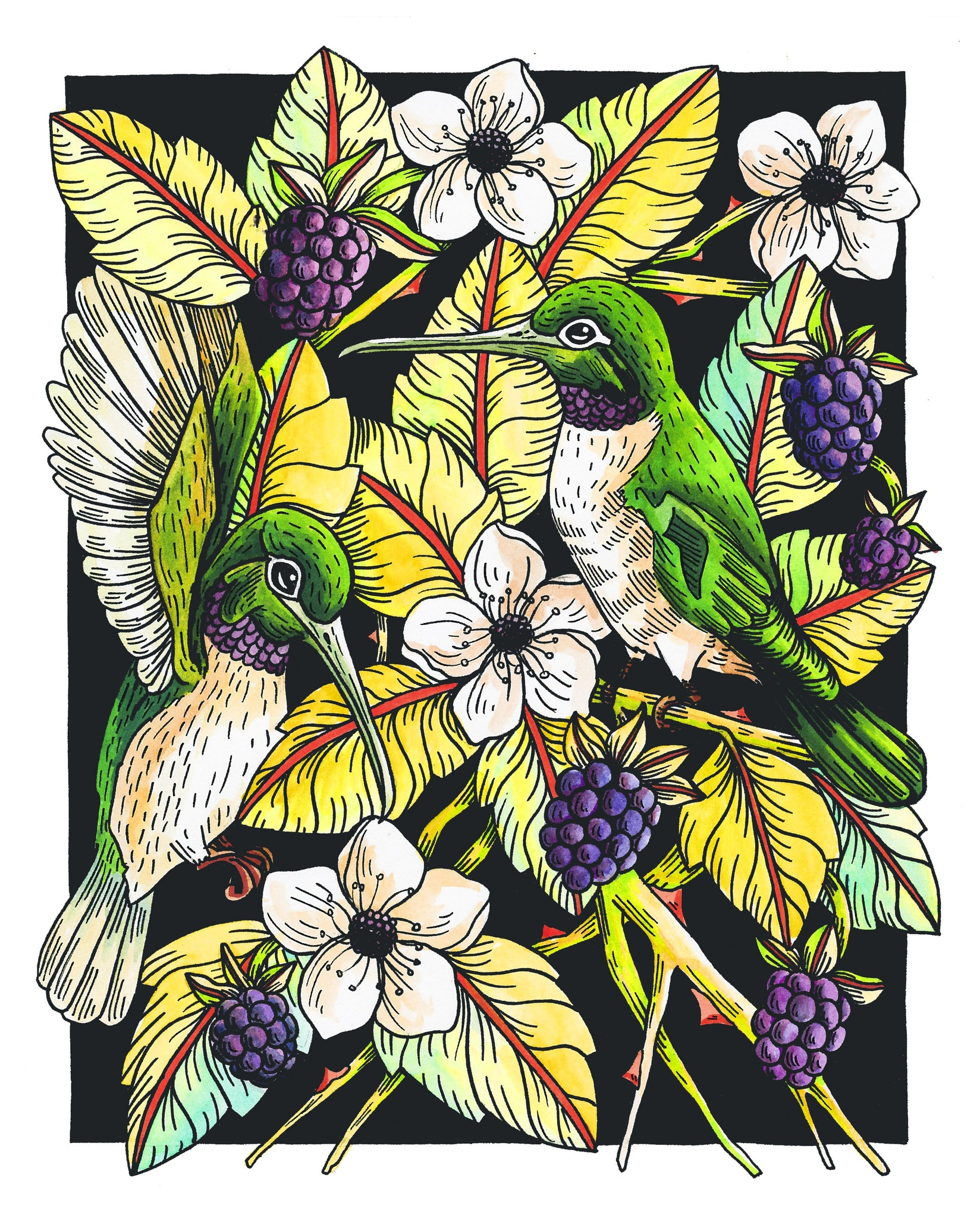 Black Chinned Hummingbird 8x10 Art Print