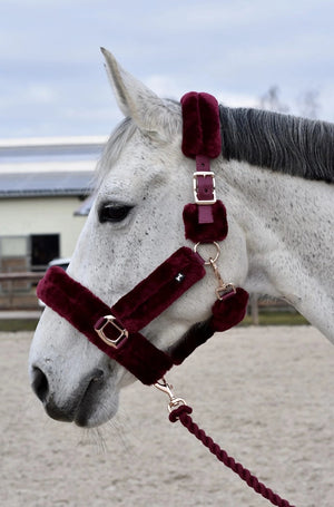 Fluffy Halter + Lead Rope (Burgundy)