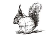 Stamp Vintage Squirrel