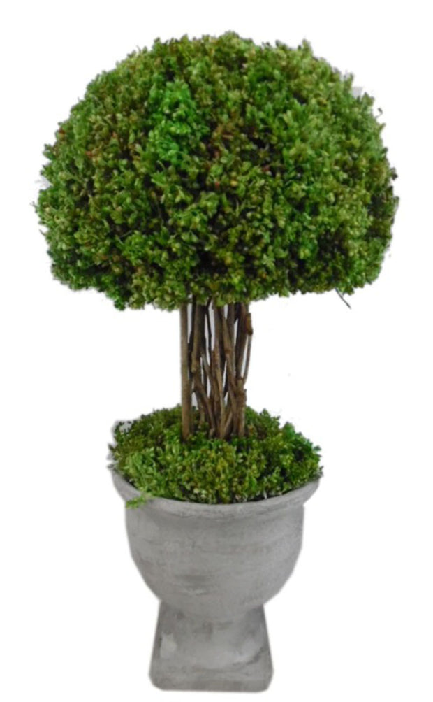 "Sophia Umbrella Tree Topiary -  Large  17"" H"