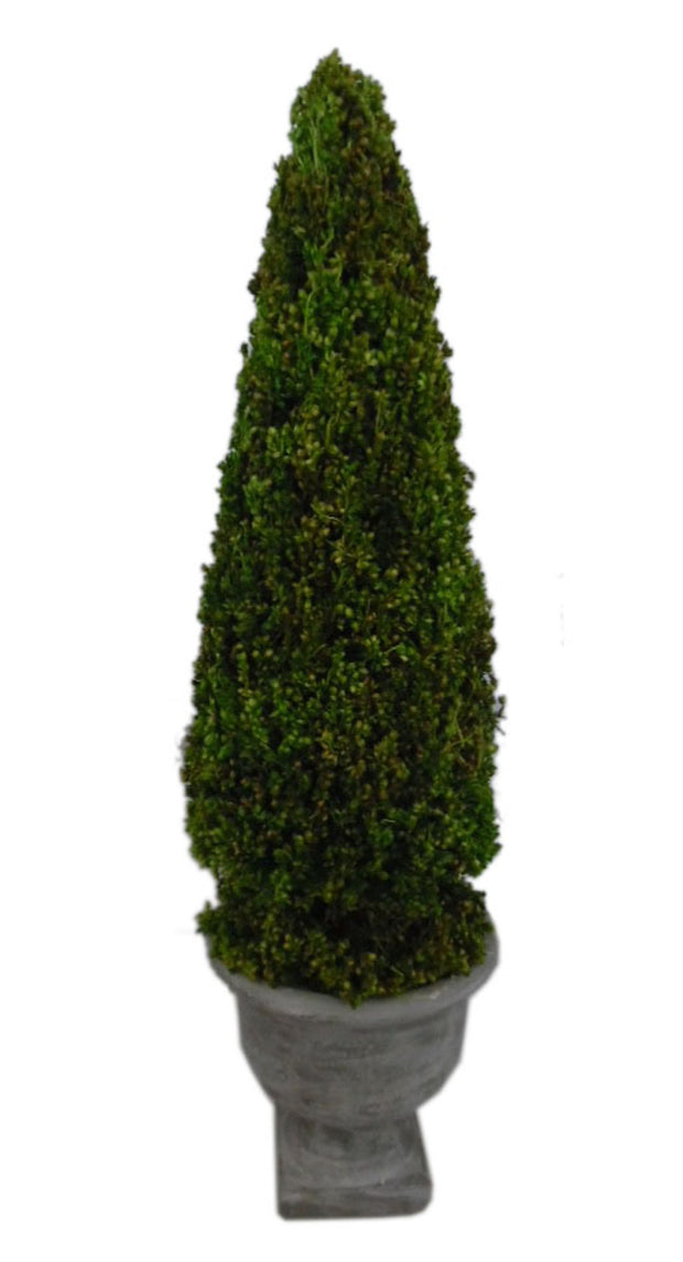 Chelsea Garden Tall Topiary in Grey Pot