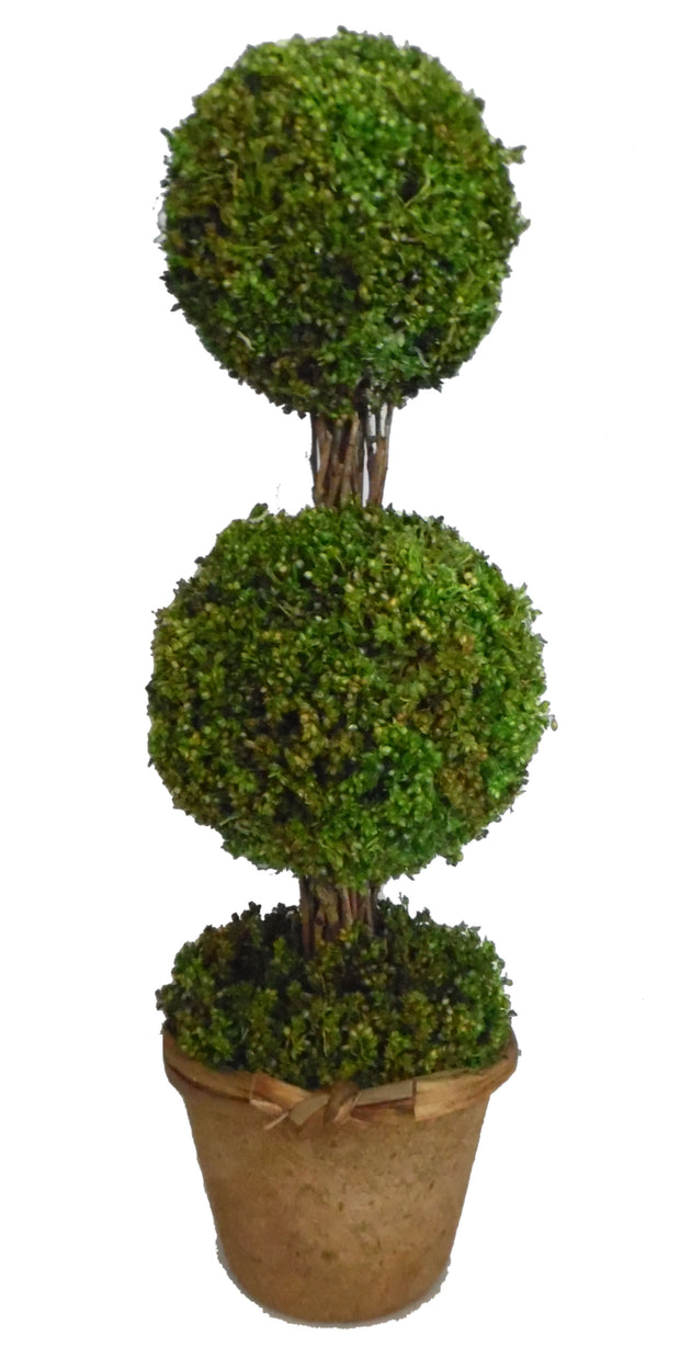 Hollyrood Garden Double Ball Topiary