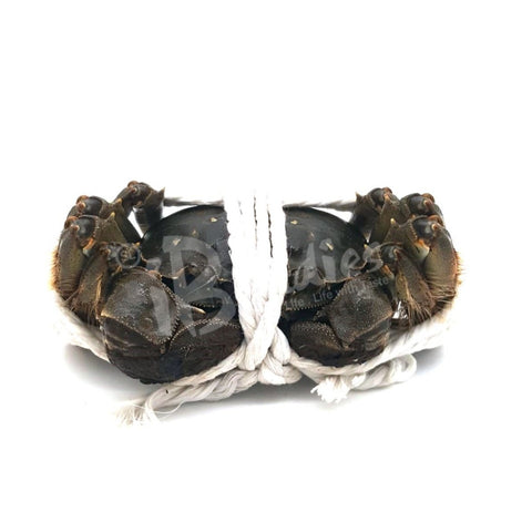 Jiangsu Hairy Crab/ 江蘇大閘蟹
