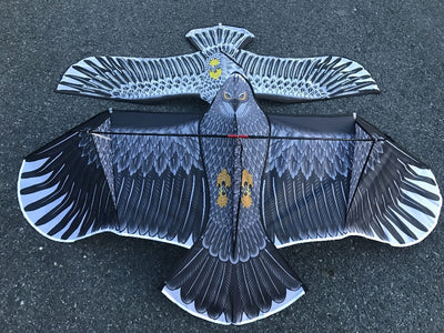 Large Eagle kite flying - Goods Shopi