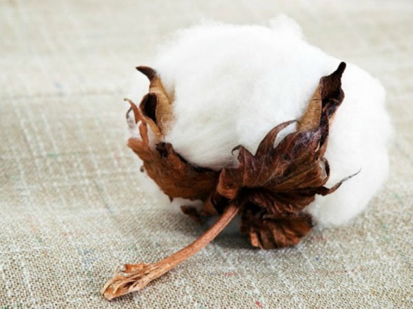 Peper Harow What Makes Organic Cotton So Good