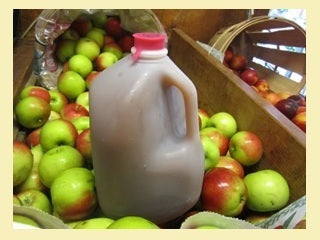 Apple Cider 1 gal.