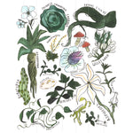Magical Herbology Print