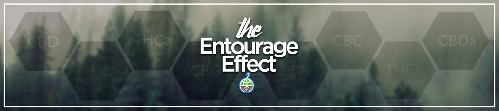 "The ""Entourage Effect"""