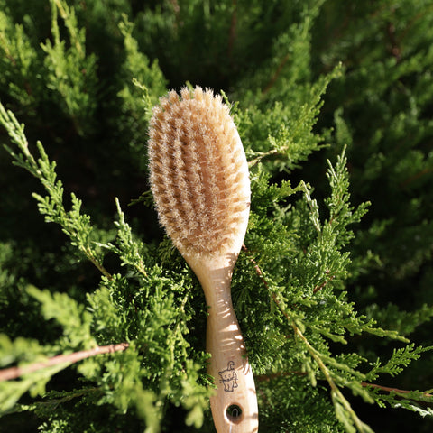 Pet brush with bristle and wood pins
