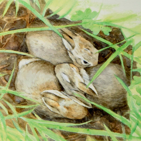 Baby Bunnies in Nest, blank greeting card