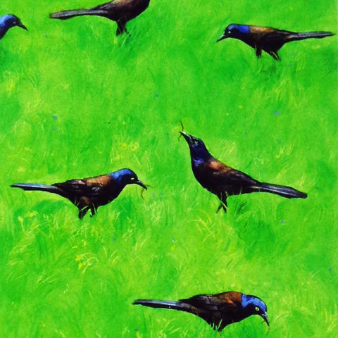 Grackle, blank greeting card