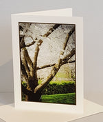 Load image into Gallery viewer, Cherry Tree Dance: photo print