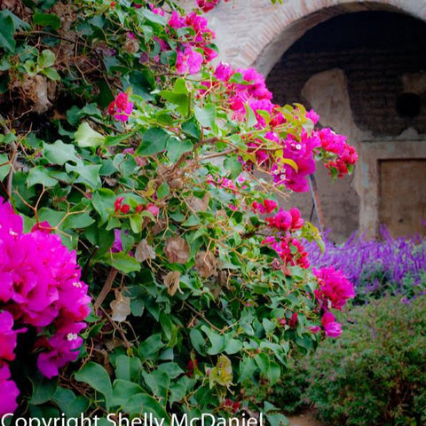Mission San Juan Capistrano: photo print by Shelly