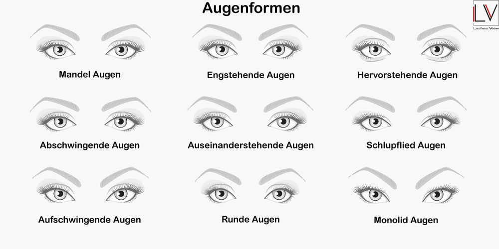 Wimpernguide