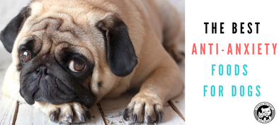 The Best Anti-Anxiety Foods for Dogs - In Pups We Trust
