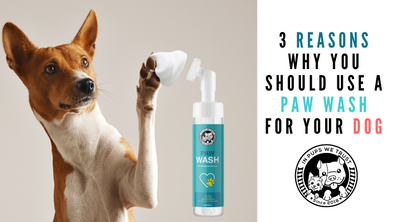 3 Reasons Why You Should Use a Paw Wash for Your Dog - In Pups We Trust