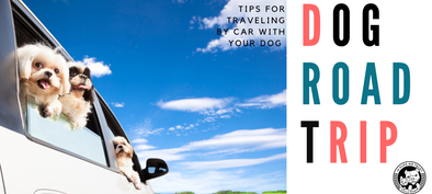Traveling by Car with Your Dog - In Pups We Trust