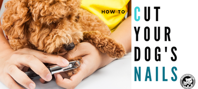How to Clip Your Dog's Nails - In Pups We Trust