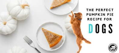 The Perfect Pumpkin Pie Recipe for Dogs - In Pups We Trust