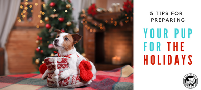 5 Tips for Preparing Your Pup for the Holidays - In Pups We Trust