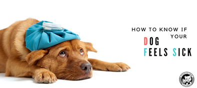 Is my dog sick? 7 signs to look out for. - In Pups We Trust