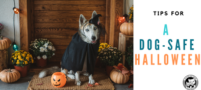 Tips for a Dog-Safe Halloween - In Pups We Trust