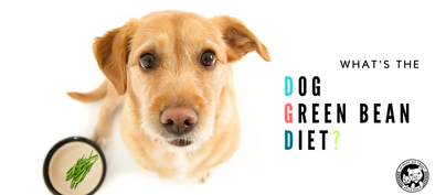 Green Bean Dog Diet for dog weight loss? - In Pups We Trust