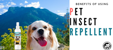 Benefits of Using a Pet Insect Repellent - In Pups We Trust