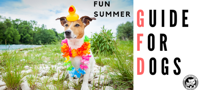 Fun Summer Guide for Dogs! - In Pups We Trust