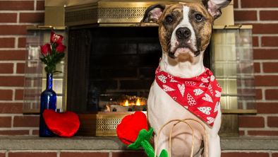 10 Ways to enjoy Valentine's Day with your Dog