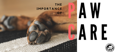 The Importance of Paw Care - In Pups We Trust