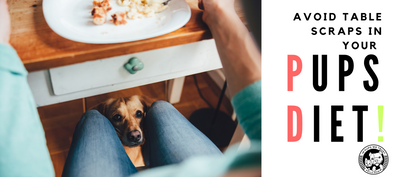Should you give table scraps to your dog? - In Pups We Trust