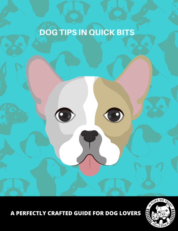 Dog Tips In Quick Bits