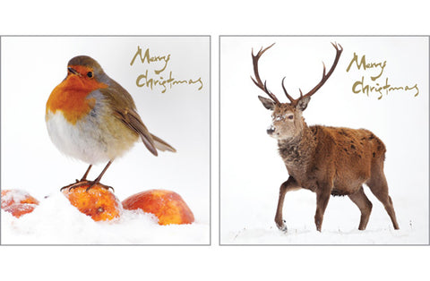 Christmas Card Pack - Robin & Stag