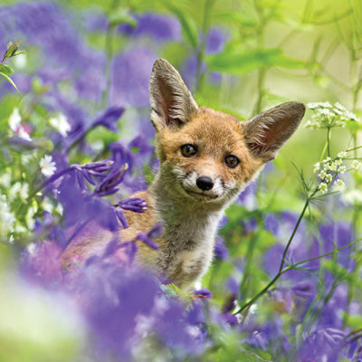 Fox Cub in Bluebells Card