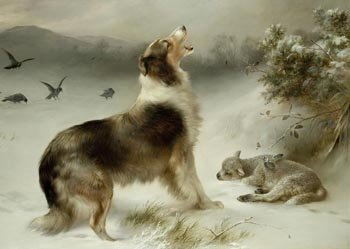 Found Collie Dog & Lamb Print By Walter Hunt