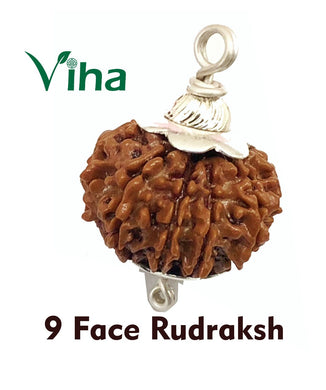 9 Face Rudraksh With Silver Cappings
