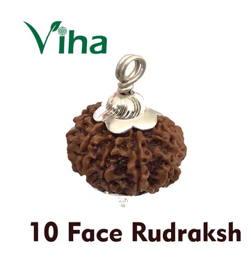 10 Face Rudraksh With Silver Cappings