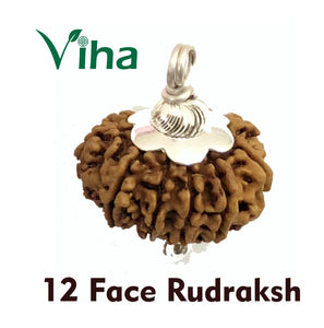 12 Face Rudraksh With Silver Cappings