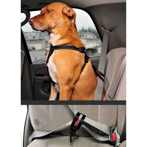Seatbelt Restraints