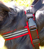 ComfortFlex Sport Harness ~ Multiple Colors