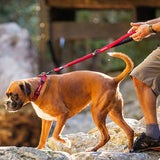Zero Shock Dog Leash ~ Available in Multiple Colors