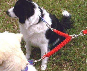 Bungee Couplers ~ Walk Your Dogs Tangle Free!