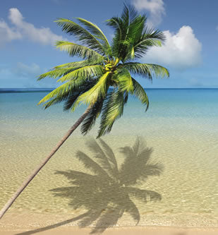 coconut tree brings coconut flour